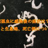 gasyokukotyu-kannsengo